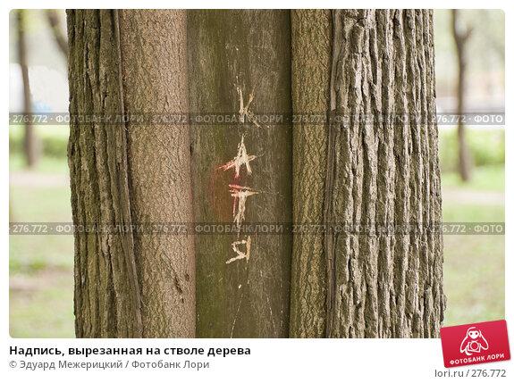 Надпись, вырезанная на стволе дерева, фото № 276772, снято 2 мая 2008 г. (c) Эдуард Межерицкий / Фотобанк Лори