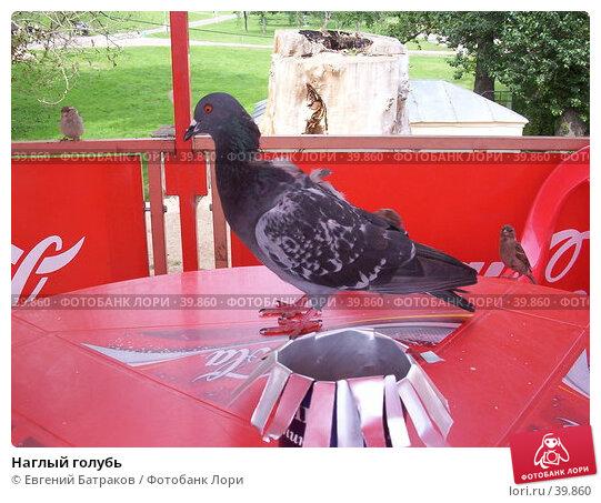 Наглый голубь, фото № 39860, снято 22 июля 2003 г. (c) Евгений Батраков / Фотобанк Лори