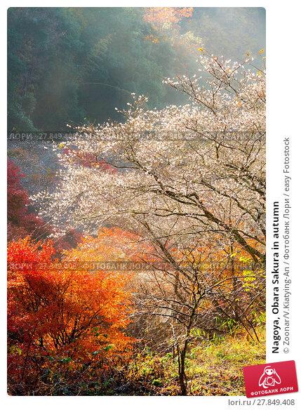 Купить «Nagoya, Obara Sakura in autumn», фото № 27849408, снято 17 июня 2019 г. (c) easy Fotostock / Фотобанк Лори