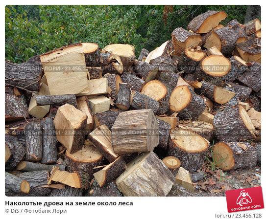 Купить «Наколотые дрова на земле около леса», фото № 23456128, снято 28 августа 2016 г. (c) DiS / Фотобанк Лори