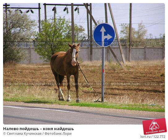 Налево пойдешь – коня найдешь, фото № 122772, снято 26 мая 2017 г. (c) Светлана Кучинская / Фотобанк Лори