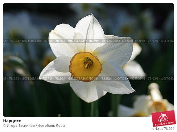 Нарцисс, фото № 78924, снято 5 мая 2007 г. (c) Игорь Веснинов / Фотобанк Лори