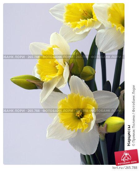 Нарциссы, фото № 265788, снято 12 апреля 2008 г. (c) Примак Полина / Фотобанк Лори