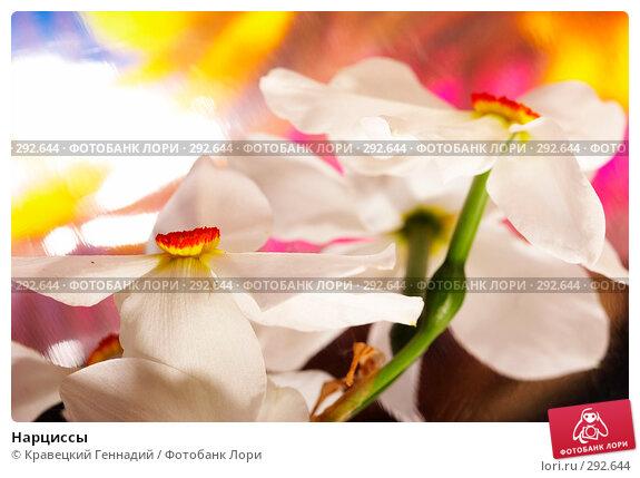 Купить «Нарциссы», фото № 292644, снято 11 мая 2005 г. (c) Кравецкий Геннадий / Фотобанк Лори