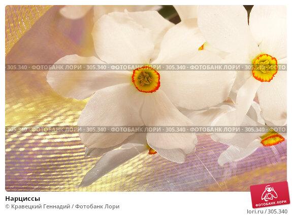Нарциссы, фото № 305340, снято 12 мая 2005 г. (c) Кравецкий Геннадий / Фотобанк Лори