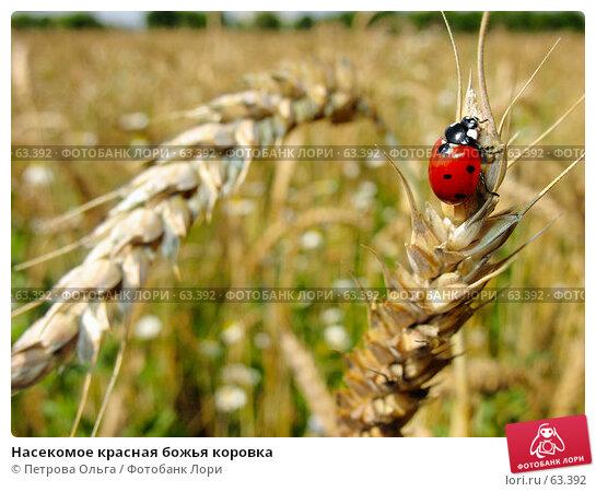 Насекомое красная божья коровка, фото № 63392, снято 11 июля 2007 г. (c) Петрова Ольга / Фотобанк Лори
