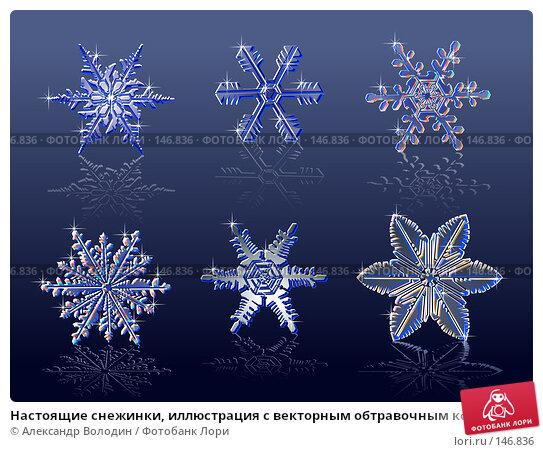 Настоящие снежинки, иллюстрация с векторным обтравочным контуром на синем фоне, иллюстрация № 146836 (c) Александр Володин / Фотобанк Лори