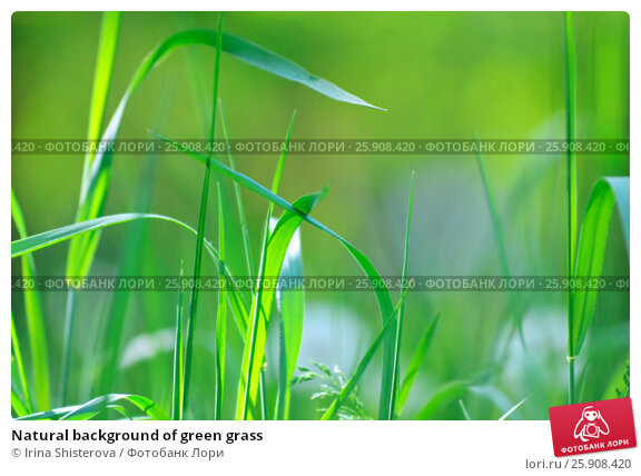 Купить «Natural background of green grass», фото № 25908420, снято 6 сентября 2014 г. (c) Irina Shisterova / Фотобанк Лори
