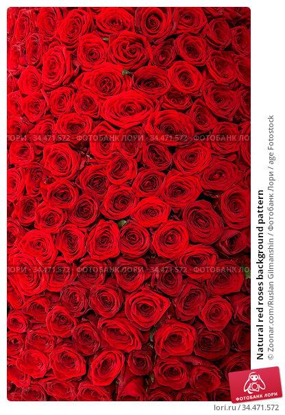 Natural red roses background pattern. Стоковое фото, фотограф Zoonar.com/Ruslan Gilmanshin / age Fotostock / Фотобанк Лори