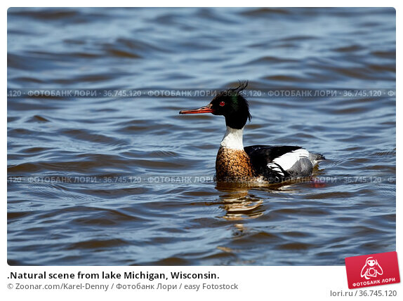 .Natural scene from lake Michigan, Wisconsin. Стоковое фото, фотограф Zoonar.com/Karel-Denny / easy Fotostock / Фотобанк Лори
