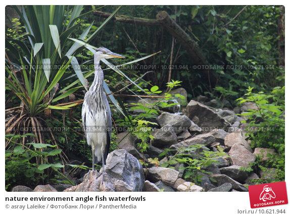 nature environment angle fish waterfowls. Стоковое фото, фотограф asray Laleike / PantherMedia / Фотобанк Лори
