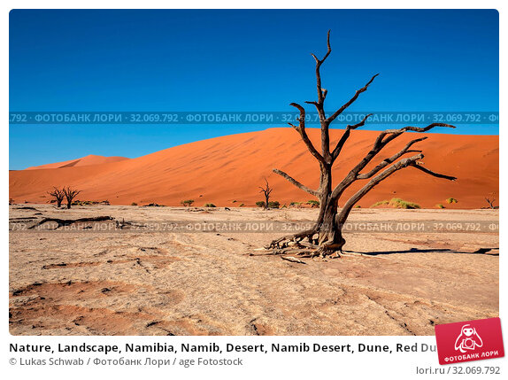 Nature, Landscape, Namibia, Namib, Desert, Namib Desert, Dune, Red Dune, Sossusvlei. Стоковое фото, фотограф Lukas Schwab / age Fotostock / Фотобанк Лори
