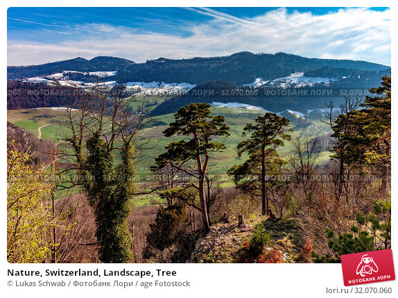 Nature, Switzerland, Landscape, Tree. Стоковое фото, фотограф Lukas Schwab / age Fotostock / Фотобанк Лори
