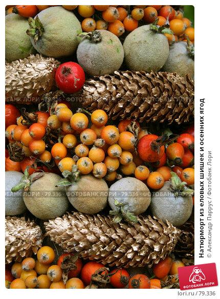 Натюрморт из еловых шишек и осенних ягод, фото № 79336, снято 10 сентября 2006 г. (c) Александр Паррус / Фотобанк Лори