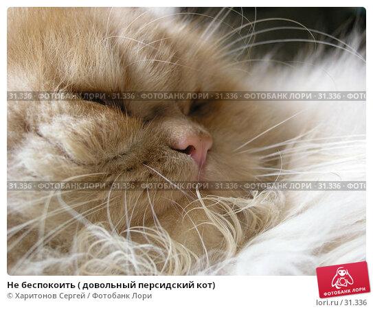 Не беспокоить ( довольный персидский кот), фото № 31336, снято 28 января 2006 г. (c) Харитонов Сергей / Фотобанк Лори