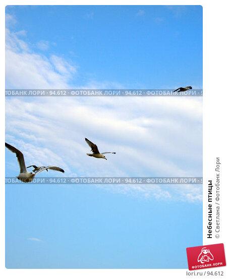 Небесные птицы, фото № 94612, снято 30 августа 2007 г. (c) Светлана / Фотобанк Лори
