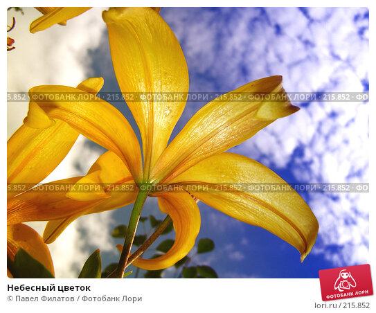 Небесный цветок, фото № 215852, снято 15 июля 2007 г. (c) Павел Филатов / Фотобанк Лори