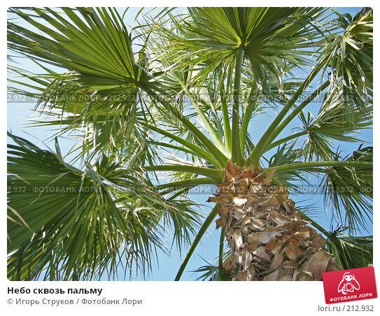 Небо сквозь пальму, фото № 212932, снято 30 июля 2004 г. (c) Игорь Струков / Фотобанк Лори
