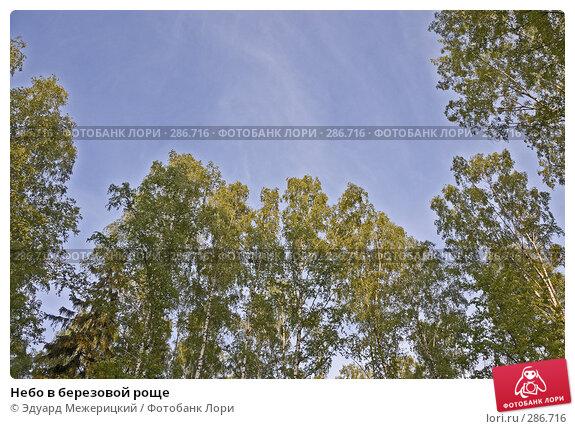 Небо в березовой роще, фото № 286716, снято 12 мая 2008 г. (c) Эдуард Межерицкий / Фотобанк Лори