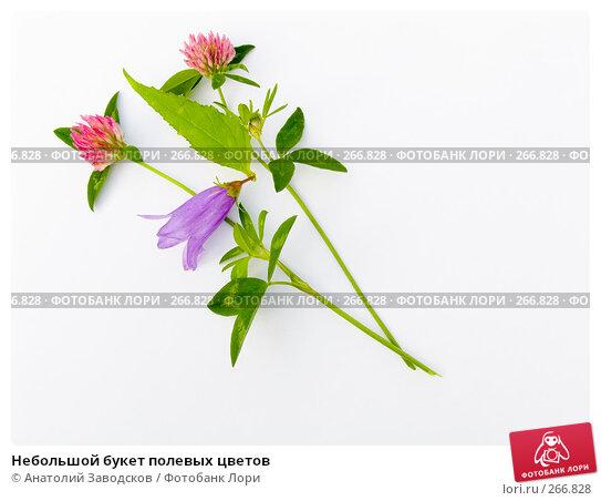 Небольшой букет полевых цветов, фото № 266828, снято 12 августа 2006 г. (c) Анатолий Заводсков / Фотобанк Лори