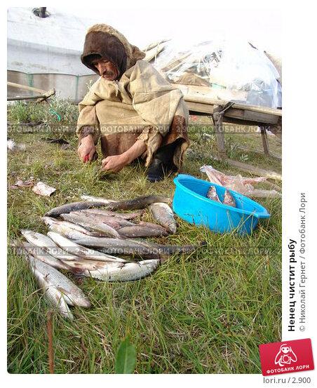 Ненец чистит рыбу, фото № 2900, снято 7 августа 2005 г. (c) Николай Гернет / Фотобанк Лори