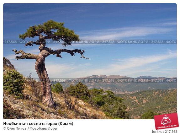 Необычная сосна в горах (Крым), фото № 217568, снято 18 сентября 2006 г. (c) Олег Титов / Фотобанк Лори