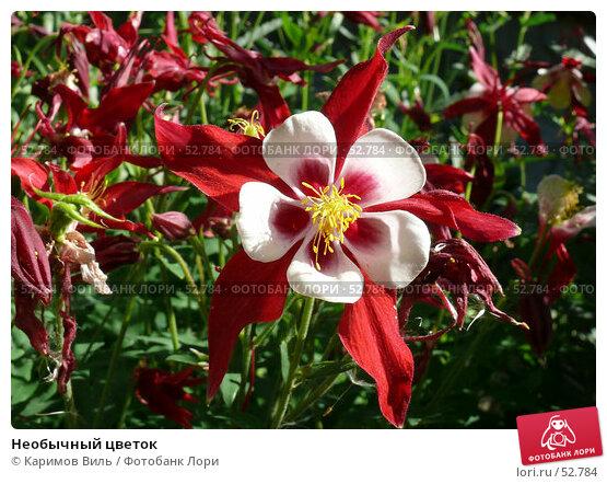 Необычный цветок, фото № 52784, снято 11 июня 2007 г. (c) Каримов Виль / Фотобанк Лори