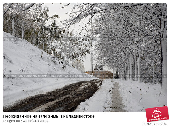 Неожиданное начало зимы во Владивостоке, фото № 102760, снято 25 января 2017 г. (c) TigerFox / Фотобанк Лори