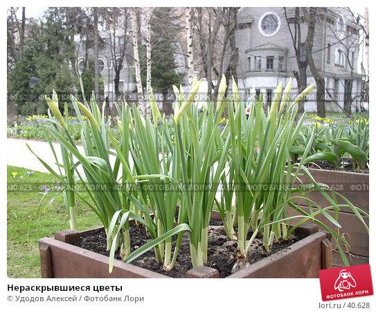 Нераскрывшиеся цветы, фото № 40628, снято 18 апреля 2007 г. (c) Удодов Алексей / Фотобанк Лори