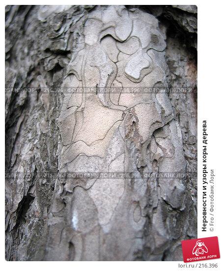 Неровности и узоры коры дерева, фото № 216396, снято 8 мая 2004 г. (c) Fro / Фотобанк Лори