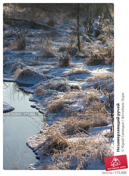 Незамерзающий ручей, фото № 173908, снято 8 января 2008 г. (c) Юрий Синицын / Фотобанк Лори