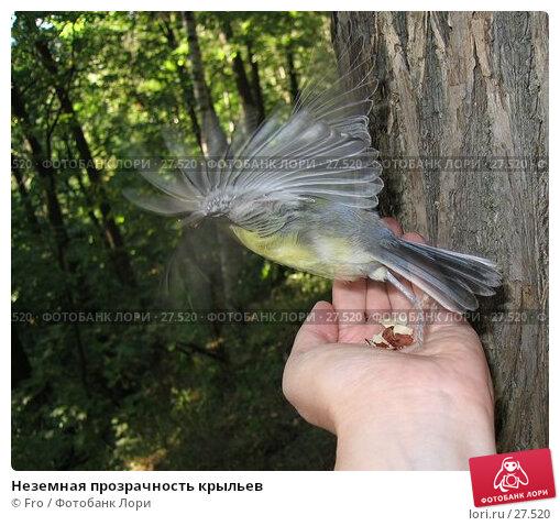 Купить «Неземная прозрачность крыльев», фото № 27520, снято 21 августа 2005 г. (c) Fro / Фотобанк Лори