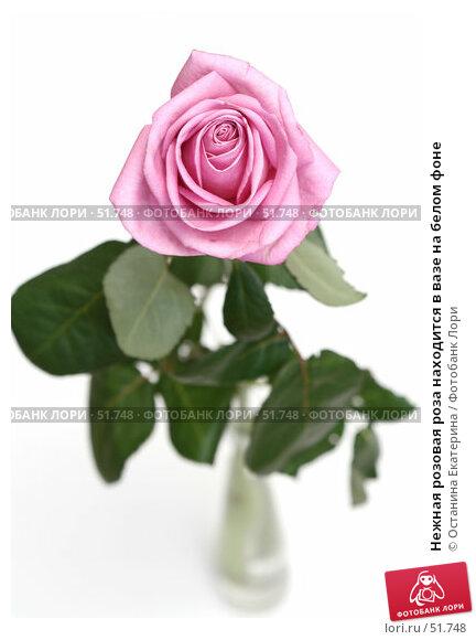 Купить «Нежная розовая роза находится в вазе на белом фоне», фото № 51748, снято 29 марта 2007 г. (c) Останина Екатерина / Фотобанк Лори