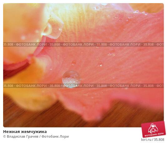 Нежная жемчужина, фото № 35808, снято 8 июля 2004 г. (c) Владислав Грачев / Фотобанк Лори