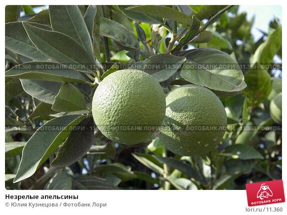 Незрелые апельсины, фото № 11360, снято 28 июля 2017 г. (c) Юлия Кузнецова / Фотобанк Лори