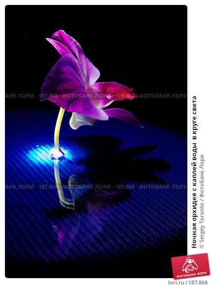 Ночная орхидея с каплей воды  в круге света, фото № 187868, снято 5 января 2008 г. (c) Sergey Toronto / Фотобанк Лори