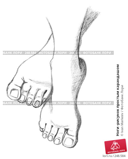 Купить «Ноги -рисунок простым карандашом», иллюстрация № 248584 (c) Ivan Markeev / Фотобанк Лори