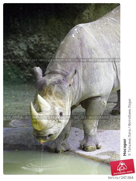 Носорог, фото № 247064, снято 15 августа 2005 г. (c) Татьяна Лата / Фотобанк Лори