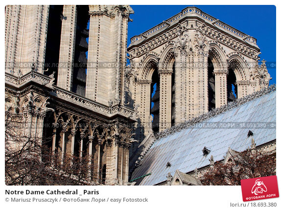 notre dame cathedral essays