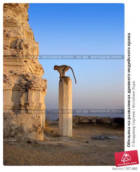 Обезьяна на развалинах древнего индийского храма, фото № 107460, снято 11 января 2005 г. (c) Владимир Сергеев / Фотобанк Лори