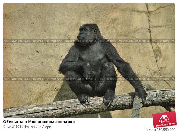 Купить «Обезьяна в Московском зоопарке», эксклюзивное фото № 30550000, снято 26 сентября 2014 г. (c) lana1501 / Фотобанк Лори