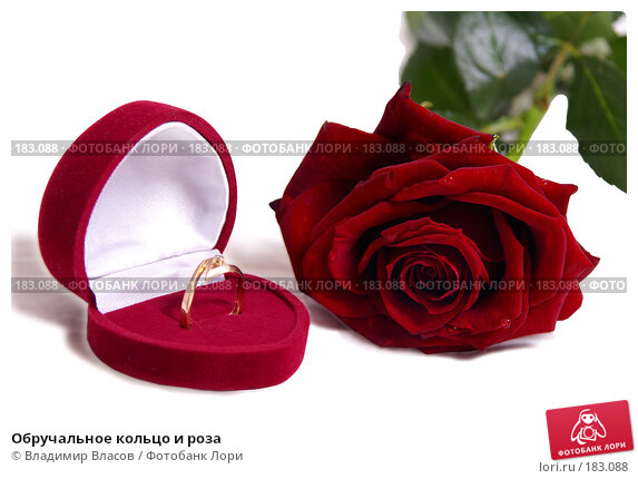 Обручальное кольцо и роза, фото № 183088, снято 19 января 2008 г. (c) Владимир Власов / Фотобанк Лори