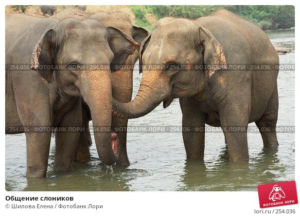 Общение слоников, фото № 254036, снято 21 января 2017 г. (c) Шилова Елена / Фотобанк Лори