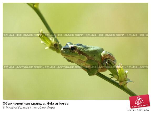Обыкновенная квакша, Hyla arborea, фото № 125424, снято 7 августа 2007 г. (c) Михаил Ушаков / Фотобанк Лори