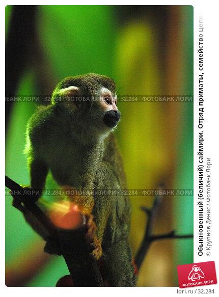 Обыкновенный (беличий) саймири. Отряд приматы, семейство цепкохвостые обезьяны., фото № 32284, снято 4 марта 2007 г. (c) Крупнов Денис / Фотобанк Лори