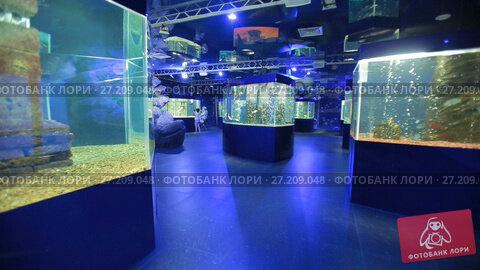 Купить «Oceanarium, a lot of aquariums», видеоролик № 27209048, снято 5 октября 2016 г. (c) Илья Шаматура / Фотобанк Лори