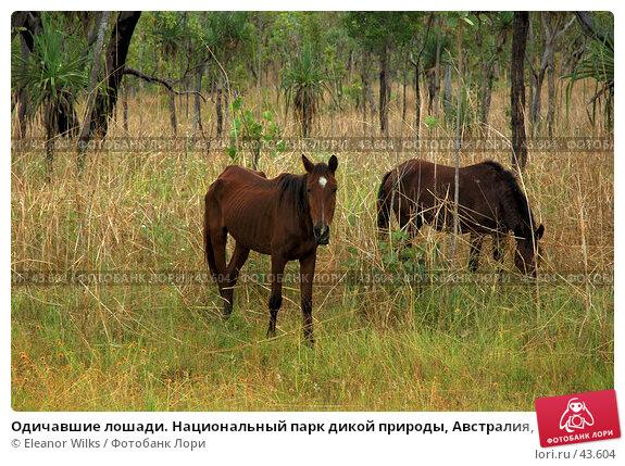 Одичавшие лошади. Национальный парк дикой природы, Австралия, Северные Территории., фото № 43604, снято 3 июня 2007 г. (c) Eleanor Wilks / Фотобанк Лори