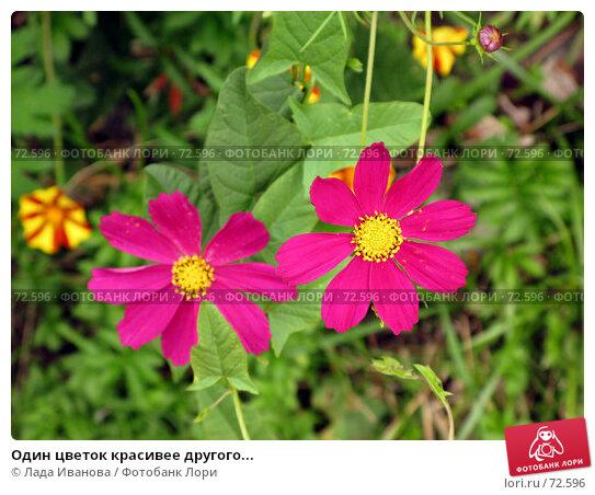 Один цветок красивее другого..., фото № 72596, снято 21 июля 2007 г. (c) Лада Иванова / Фотобанк Лори