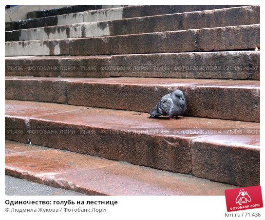 Одиночество: голубь на лестнице, фото № 71436, снято 5 августа 2007 г. (c) Людмила Жукова / Фотобанк Лори