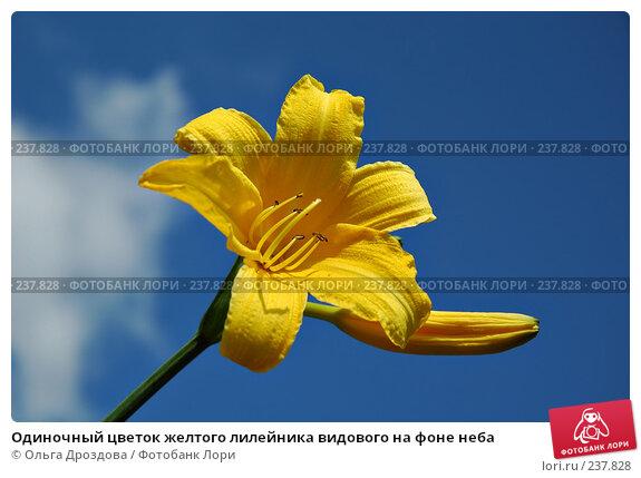 Одиночный цветок желтого лилейника видового на фоне неба, фото № 237828, снято 11 июня 2005 г. (c) Ольга Дроздова / Фотобанк Лори